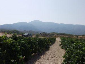 nugant vinya